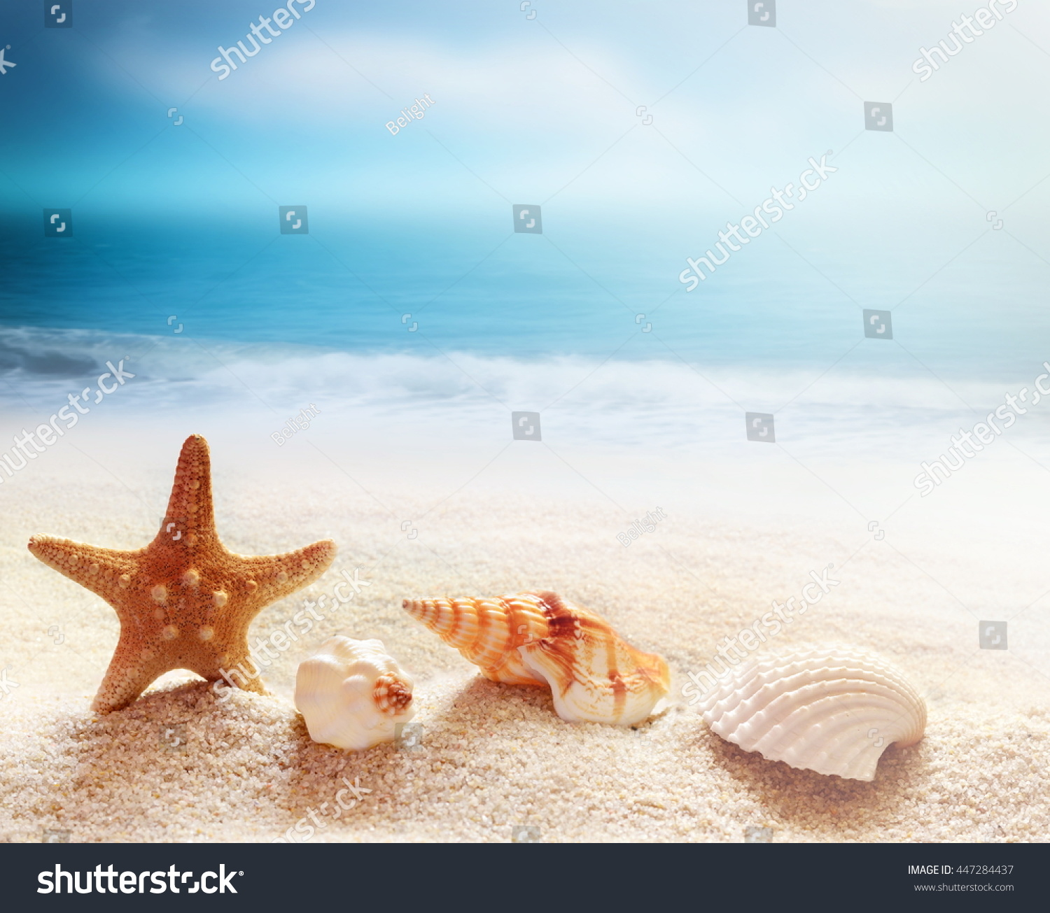 Starfish Sea Shells On Beach Ocean Stock Photo 447284437