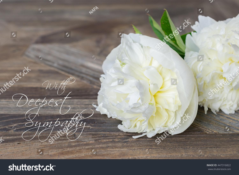 Sympathy Text Card White Peony Flower Stock Photo Edit Now