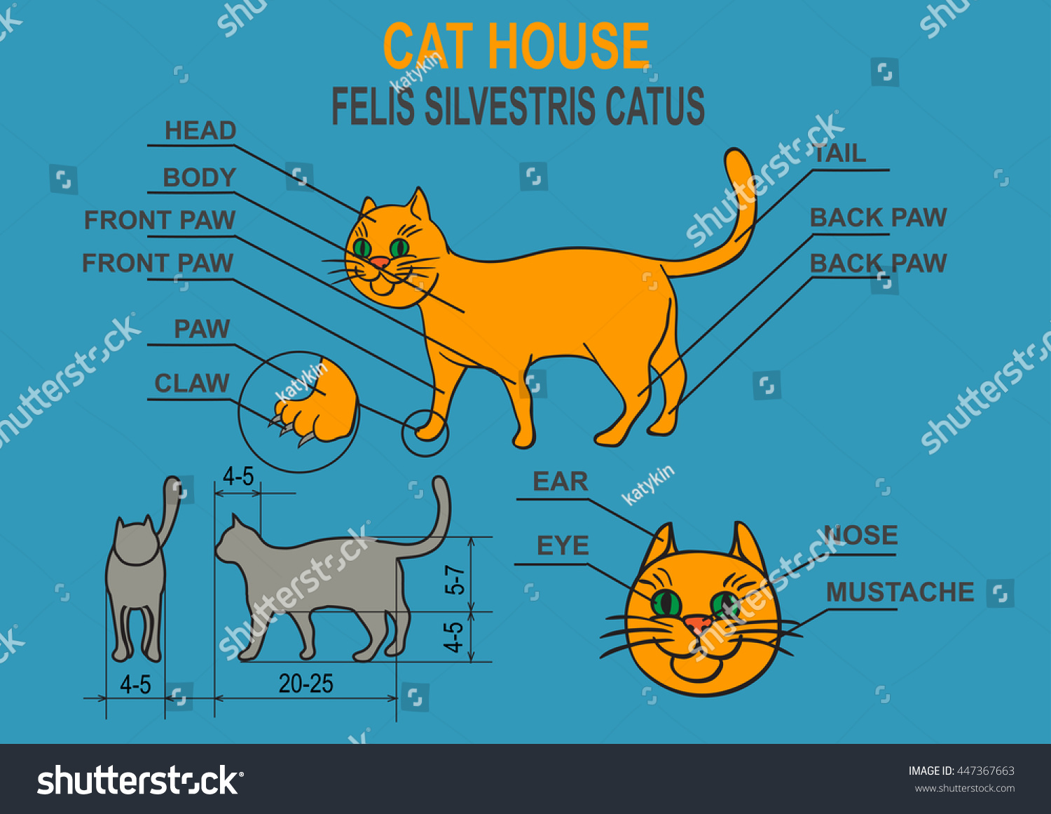 Cat Home Schematic Representation Domestic Stock Illustration Claw Of A Description The Organism Infographic