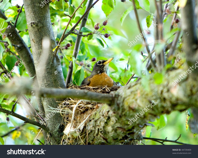 red bird nest and - photo #28