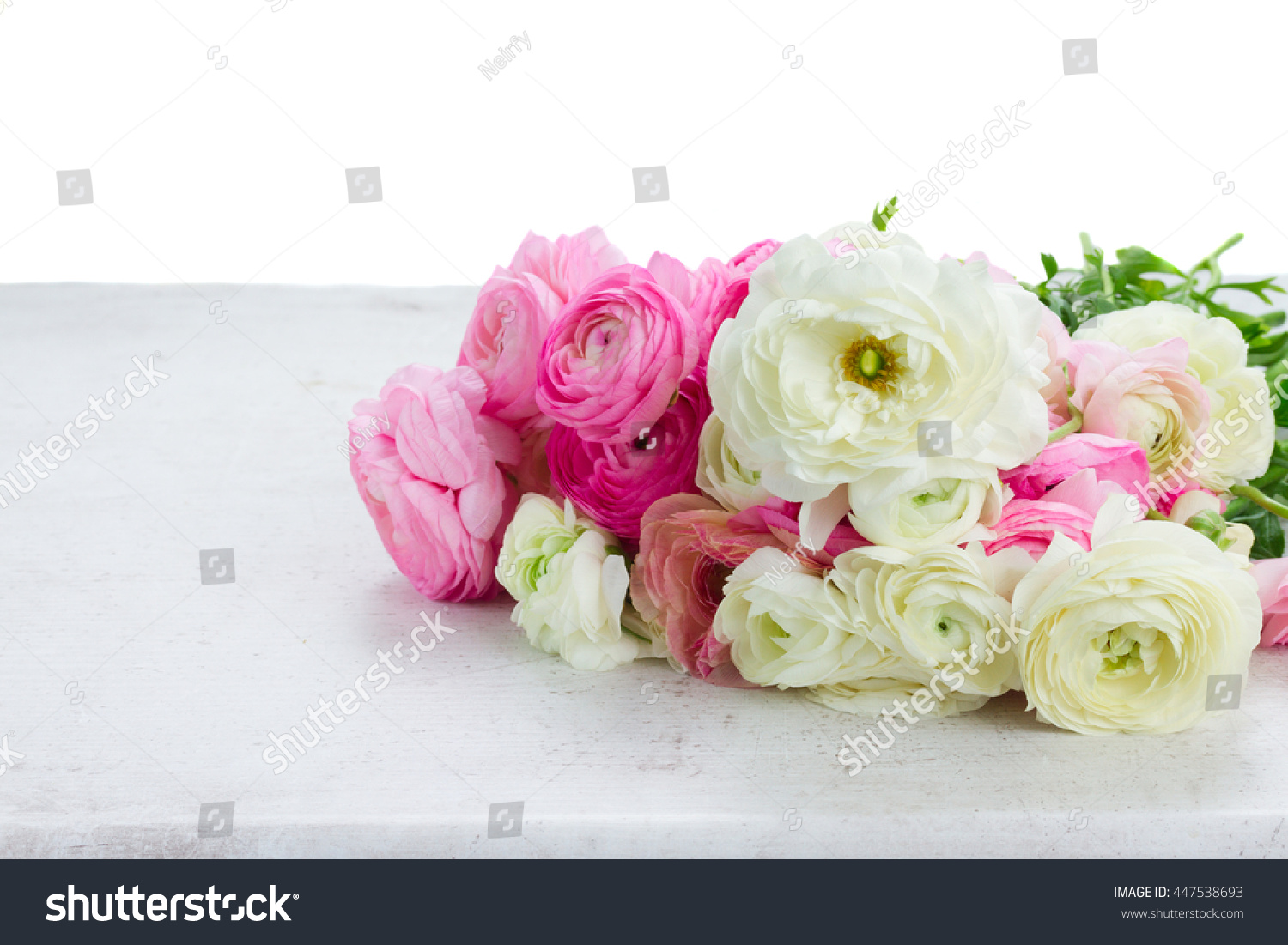 Pink And White Ranunculus Flowers On White Table Border Isolated On
