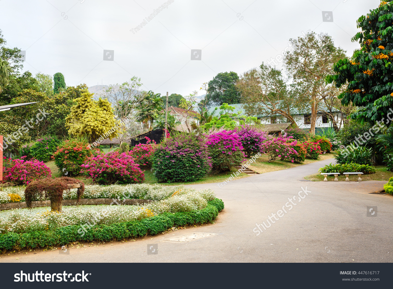 Beautiful flowers landscapes peradeniya sri lanka stock photo safe beautiful flowers landscapes in peradeniya sri lanka izmirmasajfo