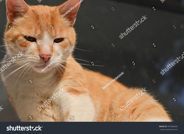 lonely sad cat - photo #6