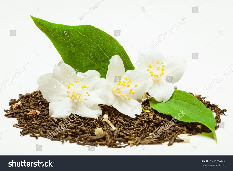 Pile Dry Jasmine Tea Fresh Jasmine Stock Photo Edit Now 447700789