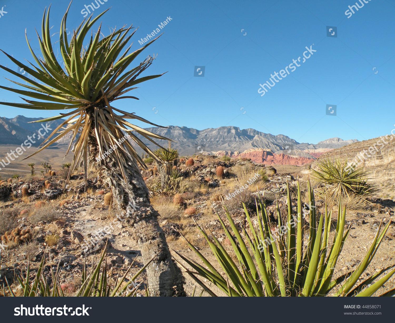 yucca tree desert landscape nevada stock photo royalty free