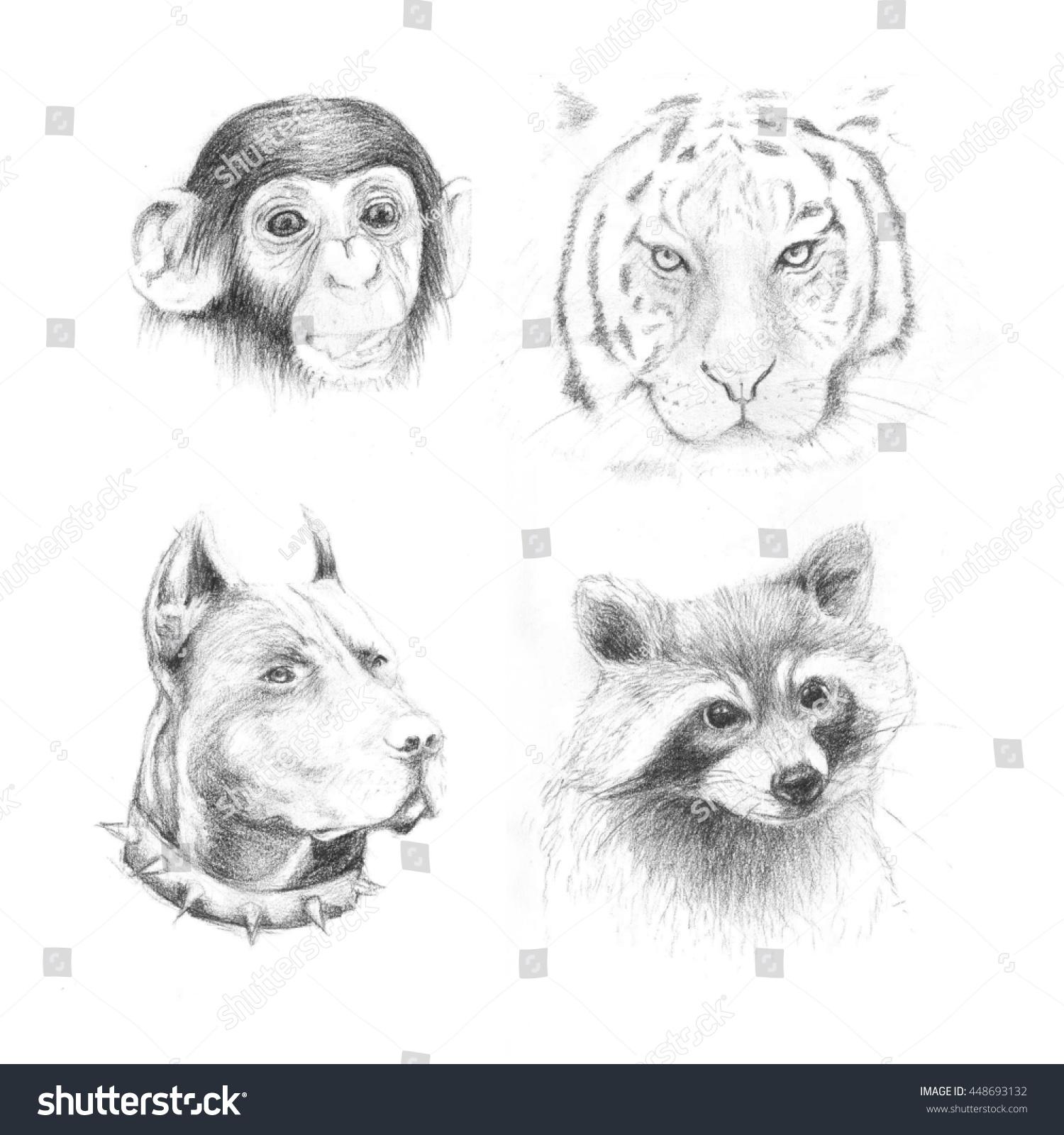 Set pencil drawing animals