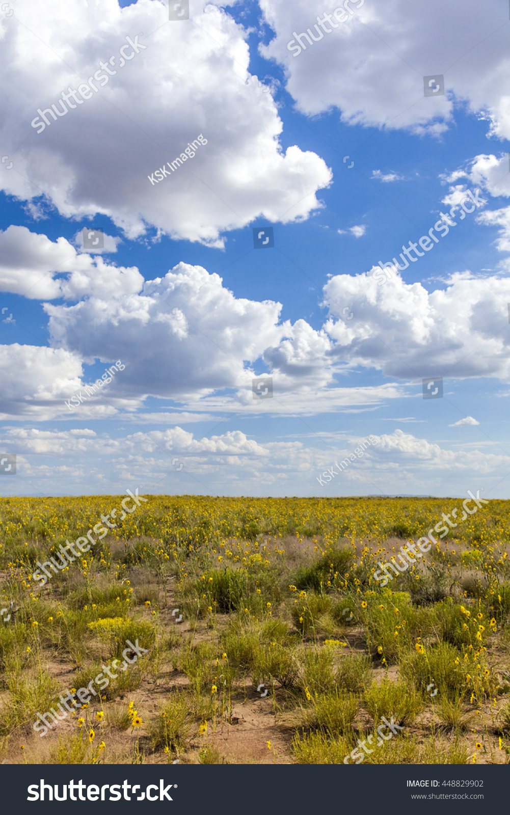 Beautiful sky and field of flowers ez canvas id 448829902 izmirmasajfo