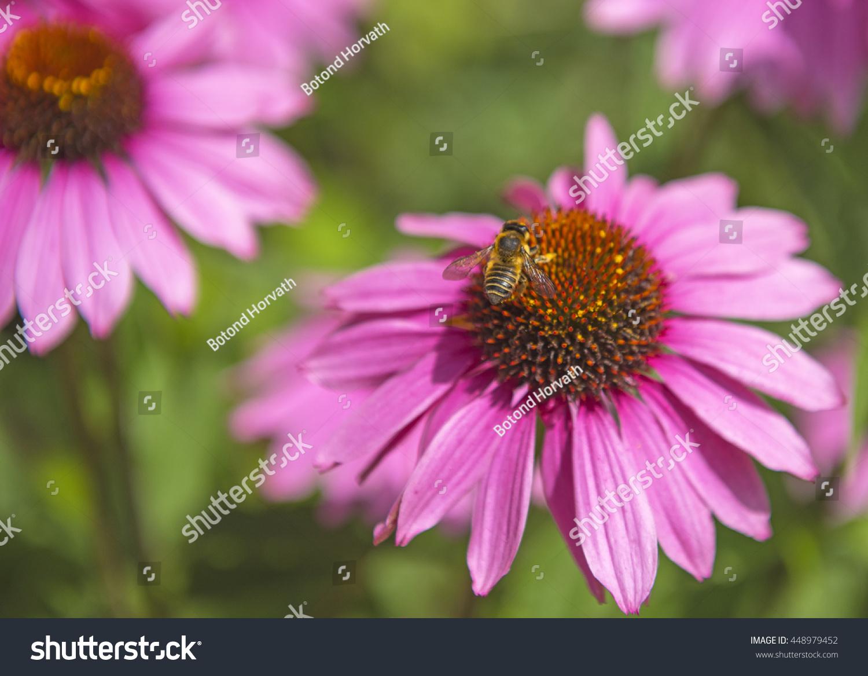 Bee in flower ez canvas mightylinksfo