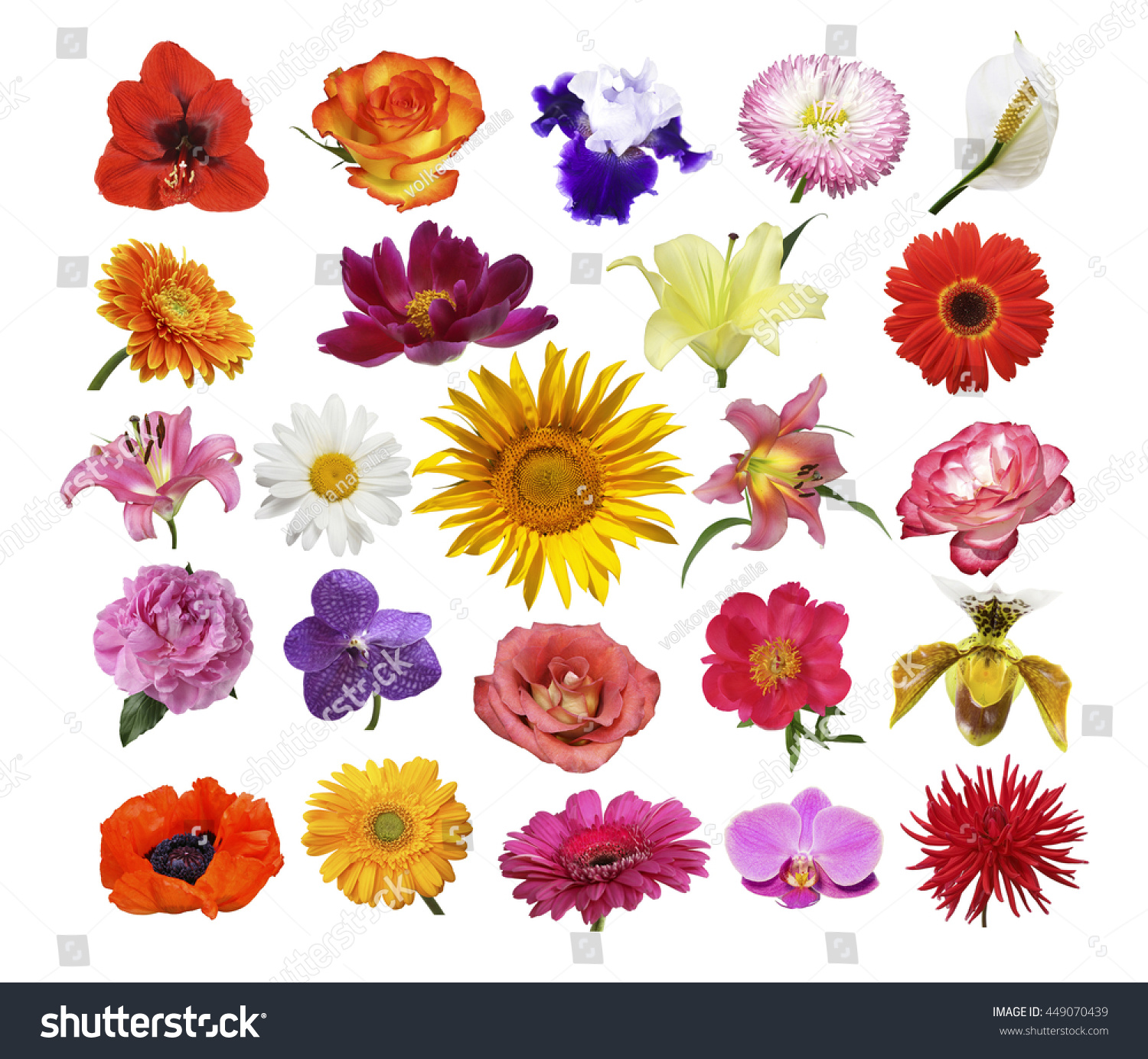 Collage Of Different Bright Multi Colored Flowers On A White