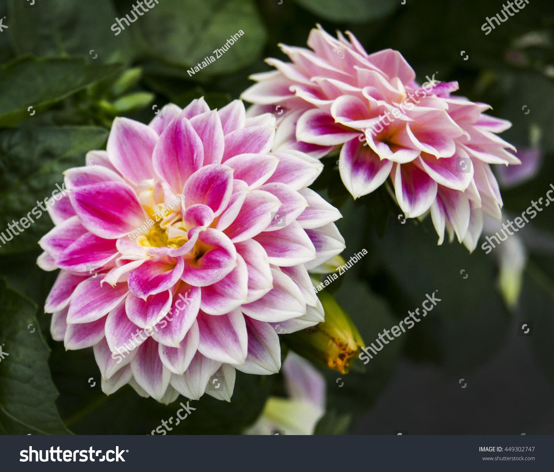 Flowers Long White Pink Petals Orange Stock Photo Edit Now