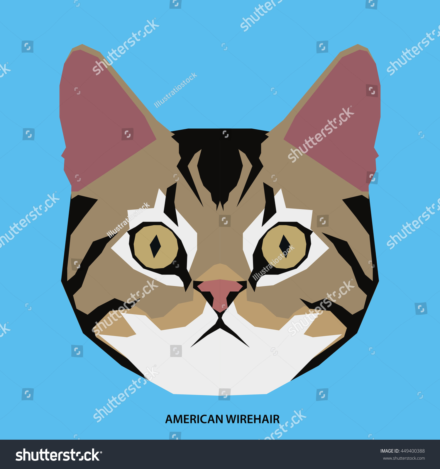 American Wirehair Isolated Cat Breed Vector Stock Vector (Royalty ...