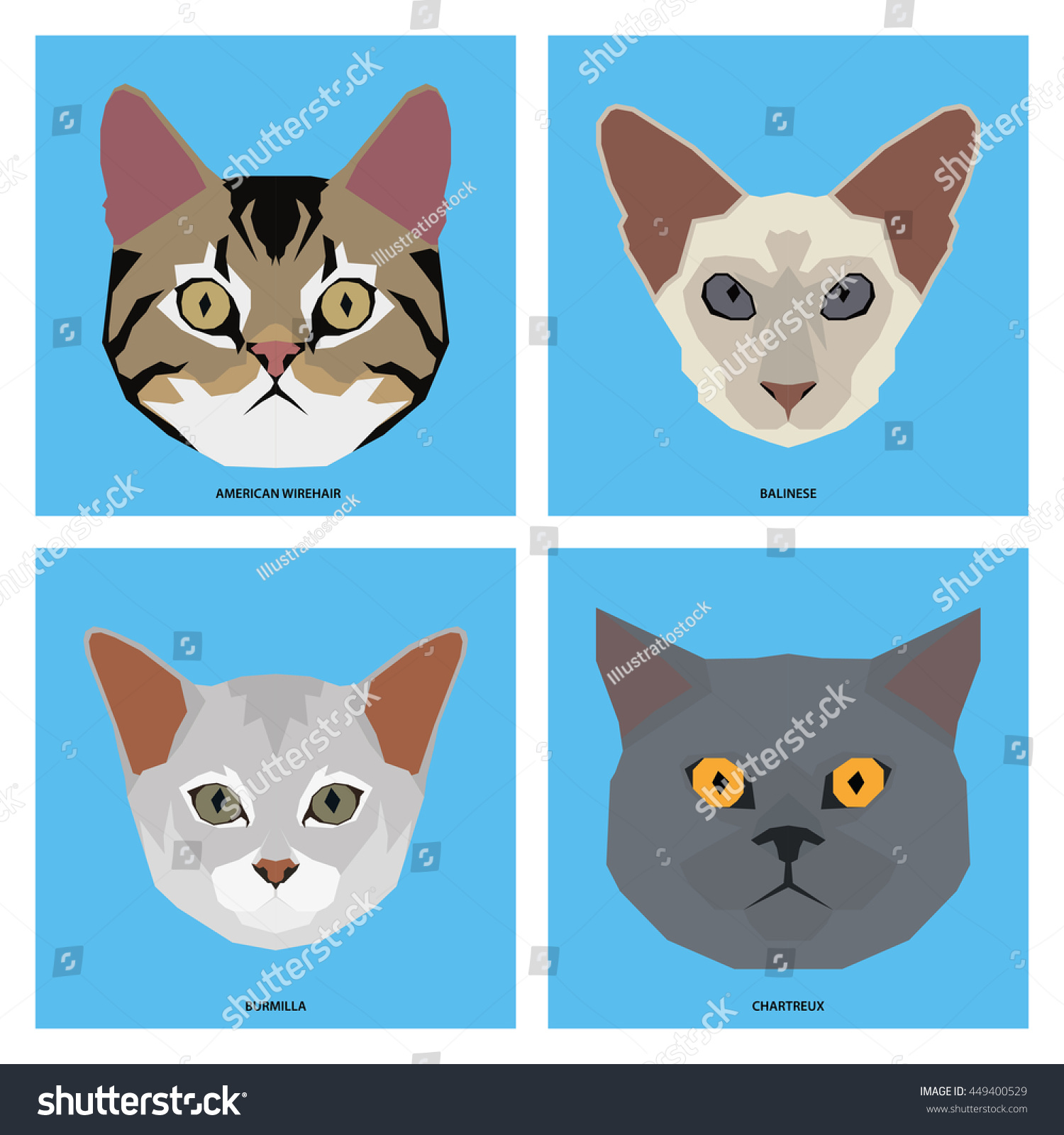 Cat breeds, set, Vector illustration   EZ Canvas