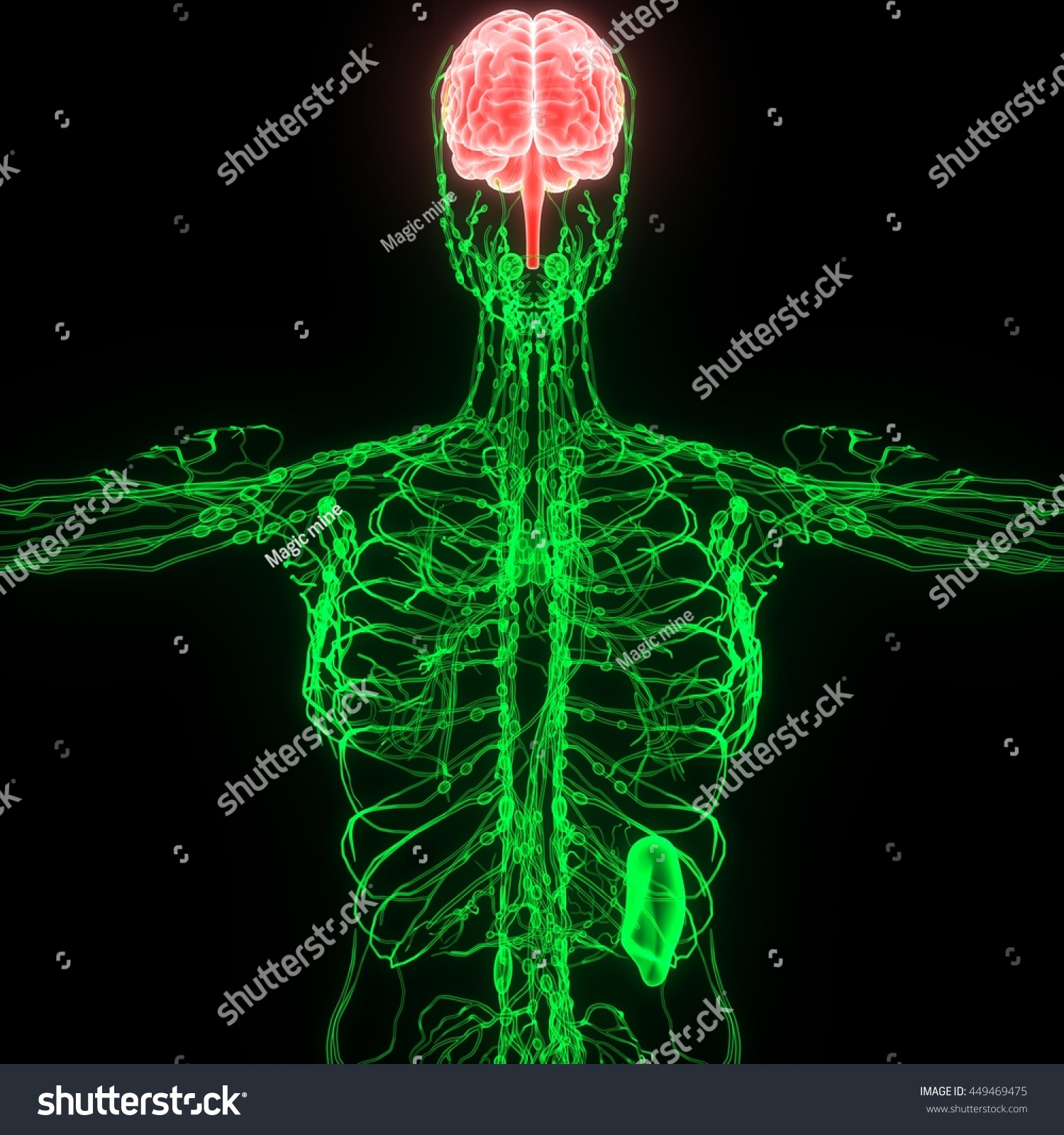 Royalty Free Stock Illustration Of Human Brain Nerves Lymph Nodes