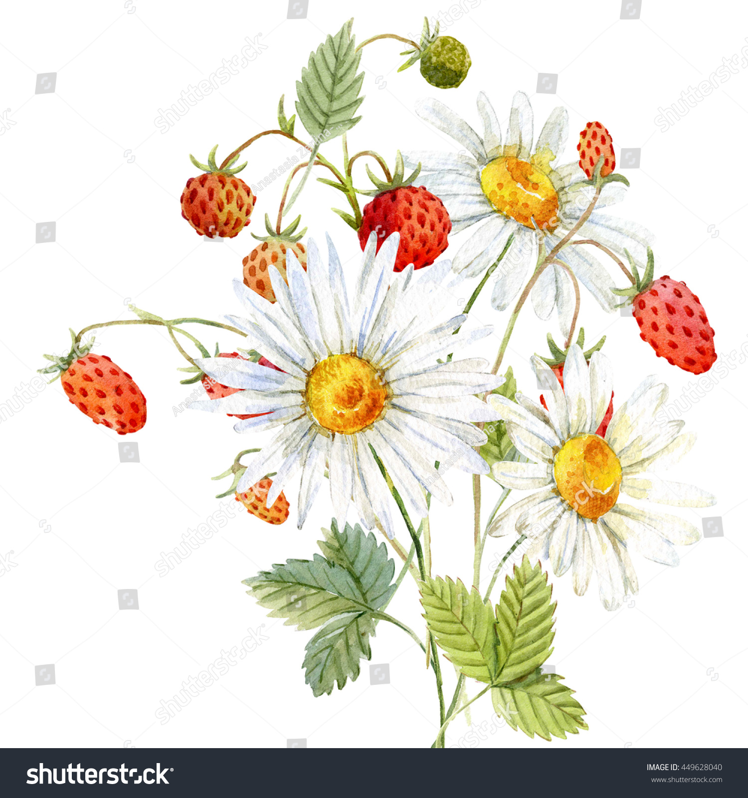 Watercolor Bouquet Daisies Strawberries Flower Card Stock
