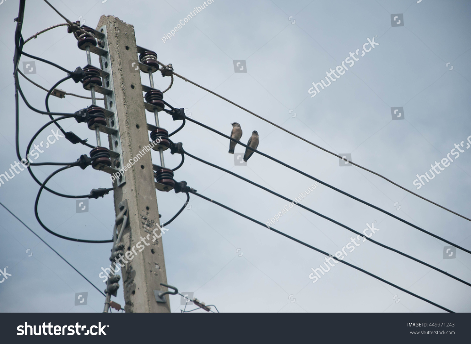 Two Little Bids Electric Wire Thailand Stock Photo (Safe to Use ...
