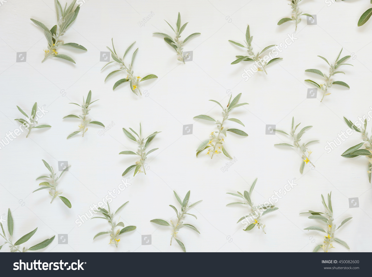Natural Frame Light Green Leaves Of Elaeagnus Commutata With Small