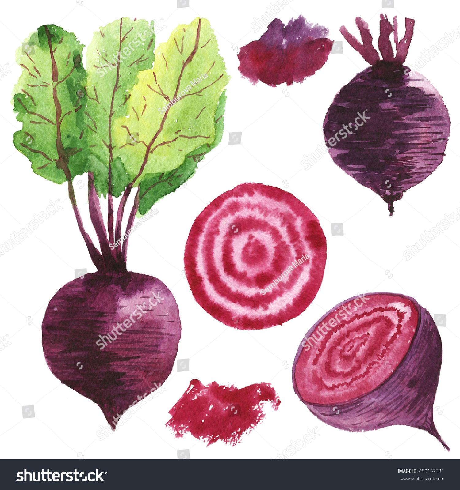 Set Beets Watercolor Food Vegetable Stock Illustration 450157381