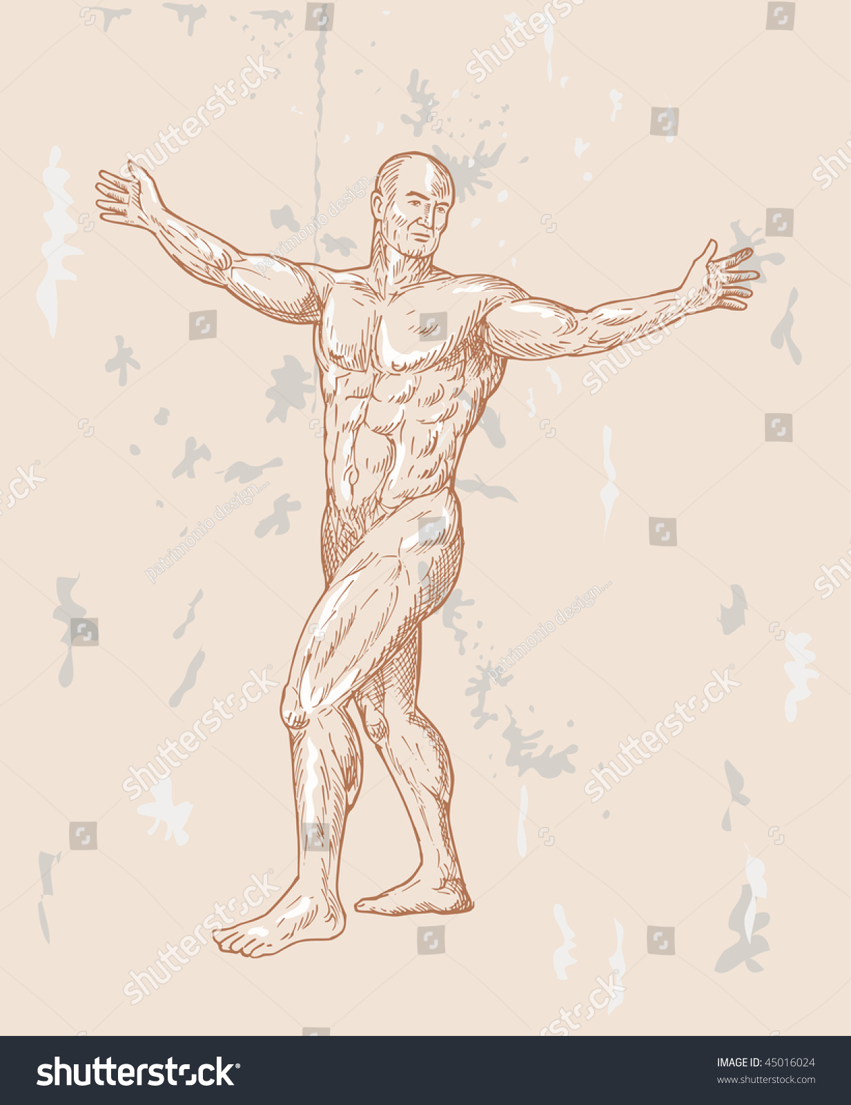 Hand Sketched Illustration Male Human Anatomy Stock Illustration ...