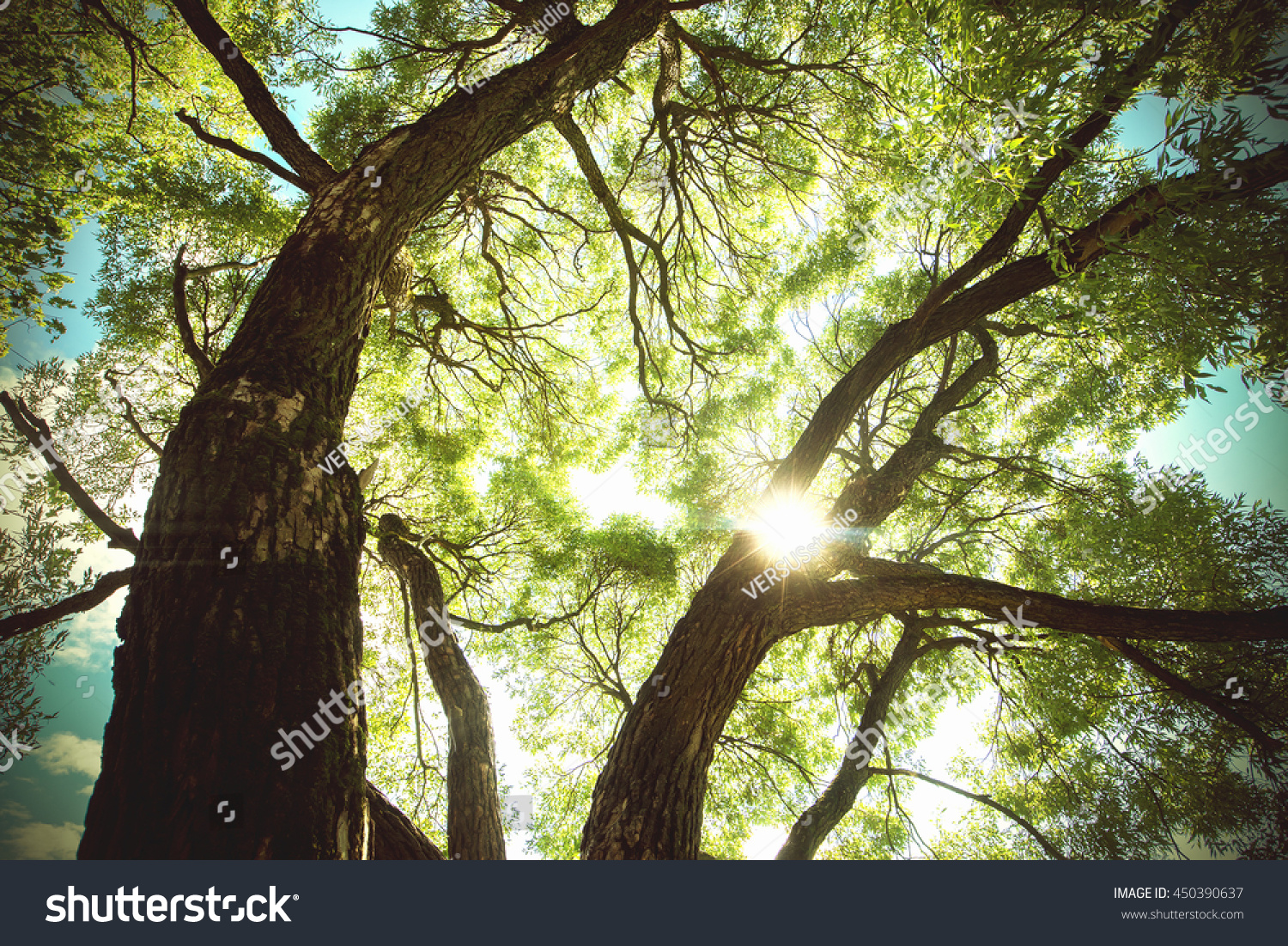 Beams Sun Green Tree Branches Nature Stock Photo (Royalty Free ...