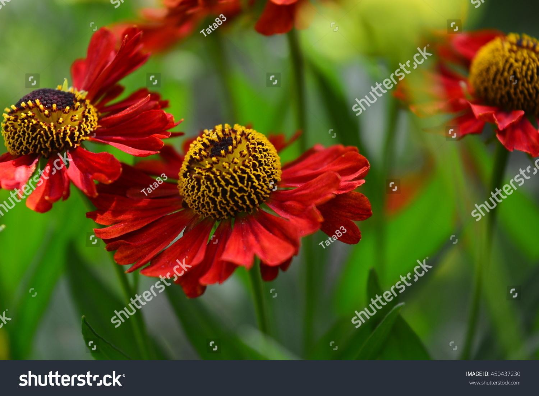 Beautiful Summer Flowers Stock Photo Edit Now 450437230 Shutterstock