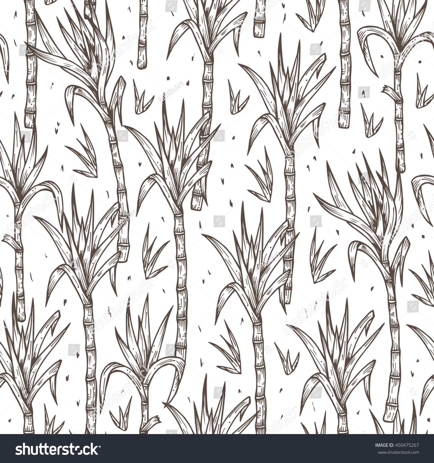 Sugar Cane Plant Drawing