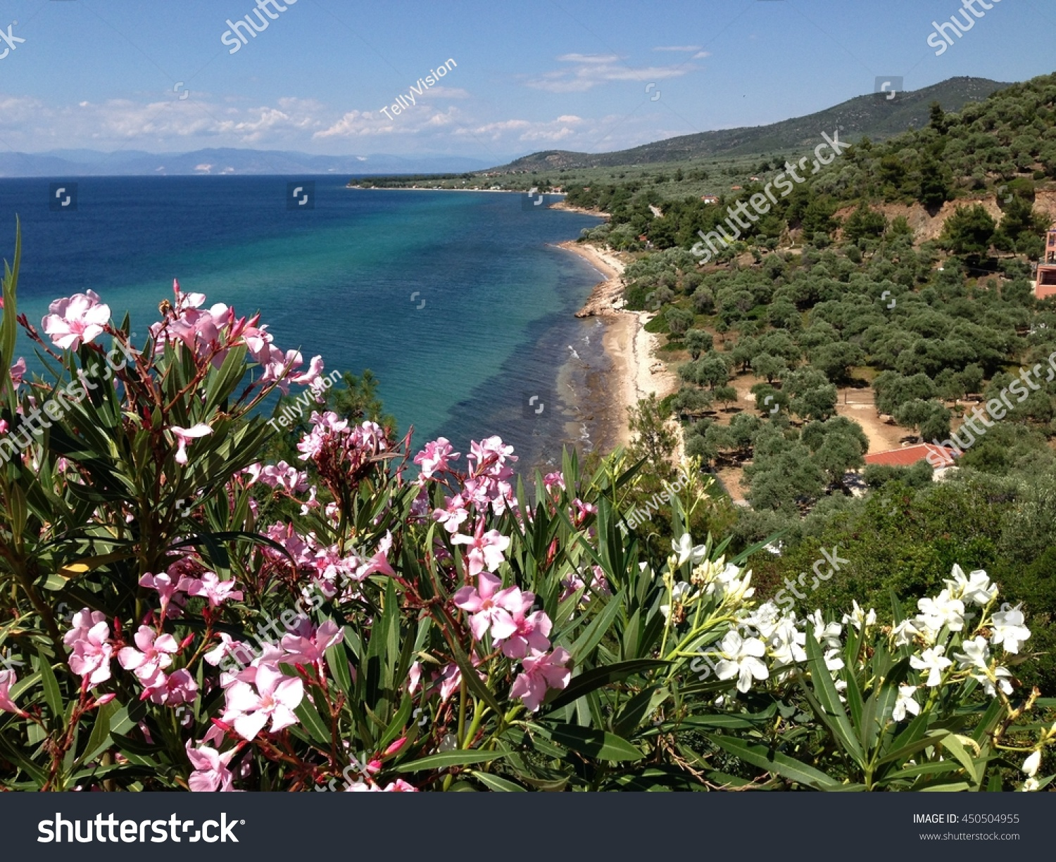 Thassos Island Coast Pink Flowers Greece Stock Photo Edit Now