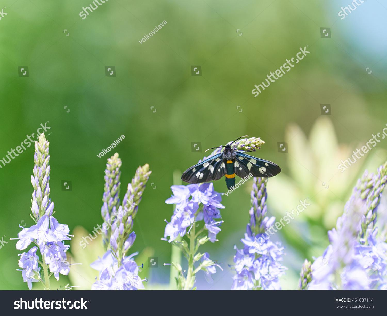 Beautiful little wild meadow of purple flowers with a butterfly on id 451087114 izmirmasajfo