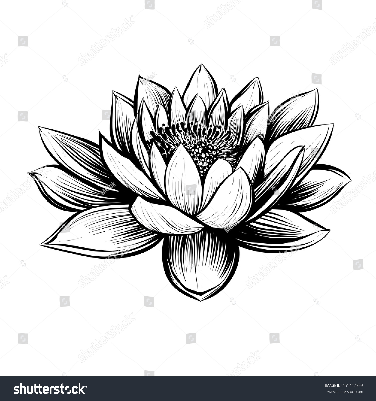 Water Lily Stencil Black And White: Stock-vector-vector-water-lily-lotus-illustration-black
