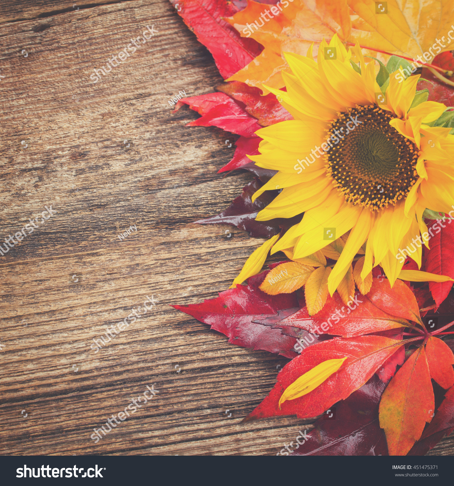 Fresh Yellow Sunflower And Fall Leaves On Wooden Background Retro Toned