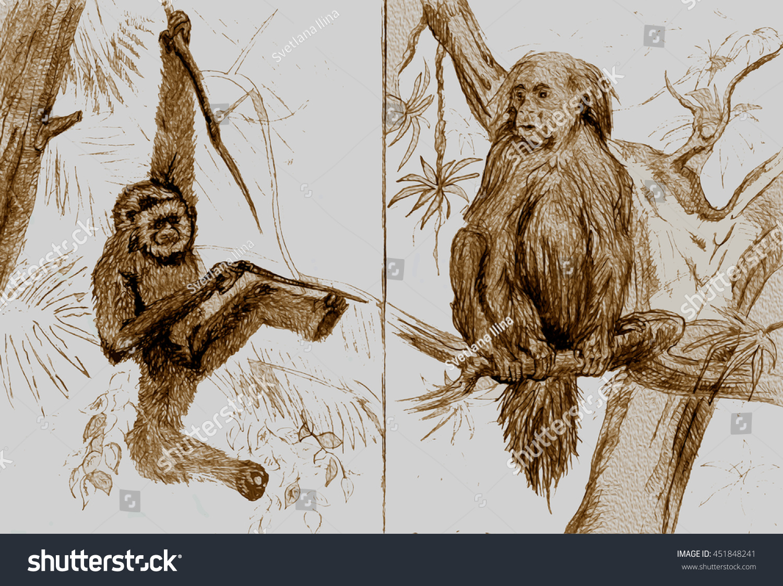 hand drawn sketches two monkeys endangered stock illustration