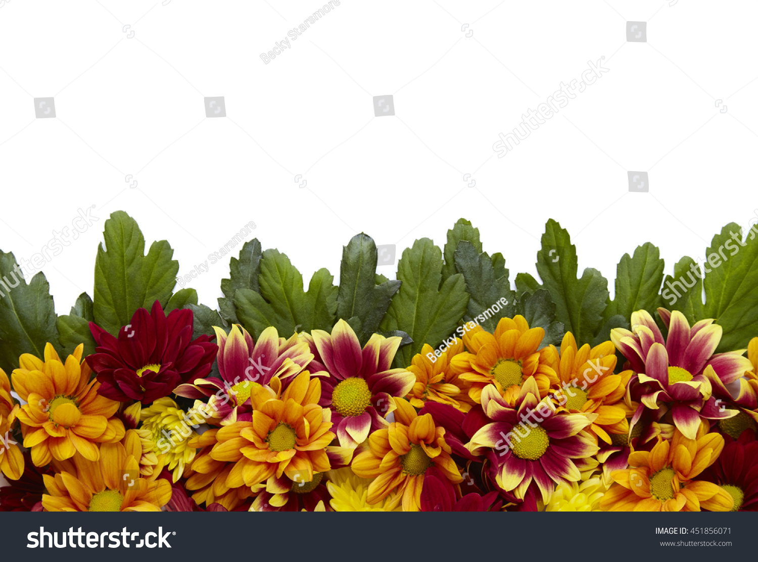 Red Orange Yellow Flowers Green Leaves Stock Photo Edit Now