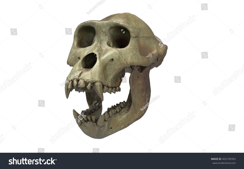 Gorilla Skull 3 D Illustration Isolated On Stock Illustration ...