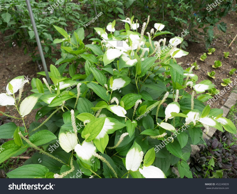 White fragrant plantain lily flowers ez canvas izmirmasajfo