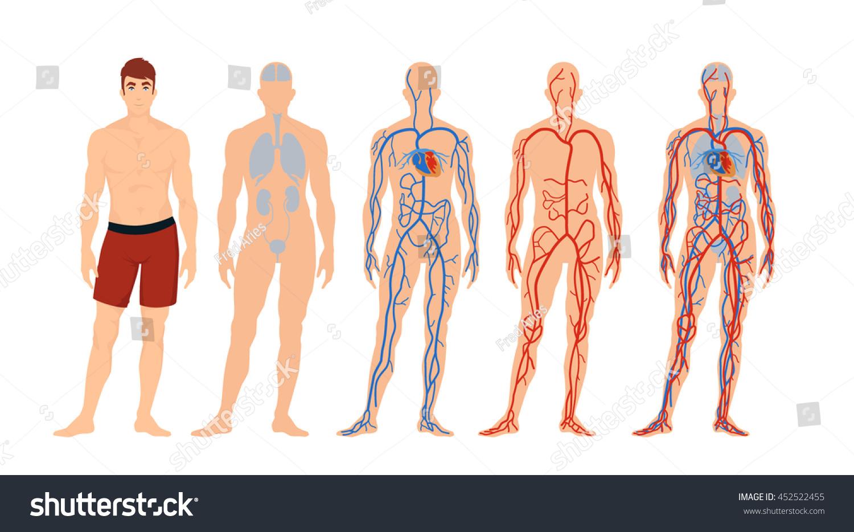 Flat Vector Man Characters Blood Circulation Stock Vector (Royalty ...