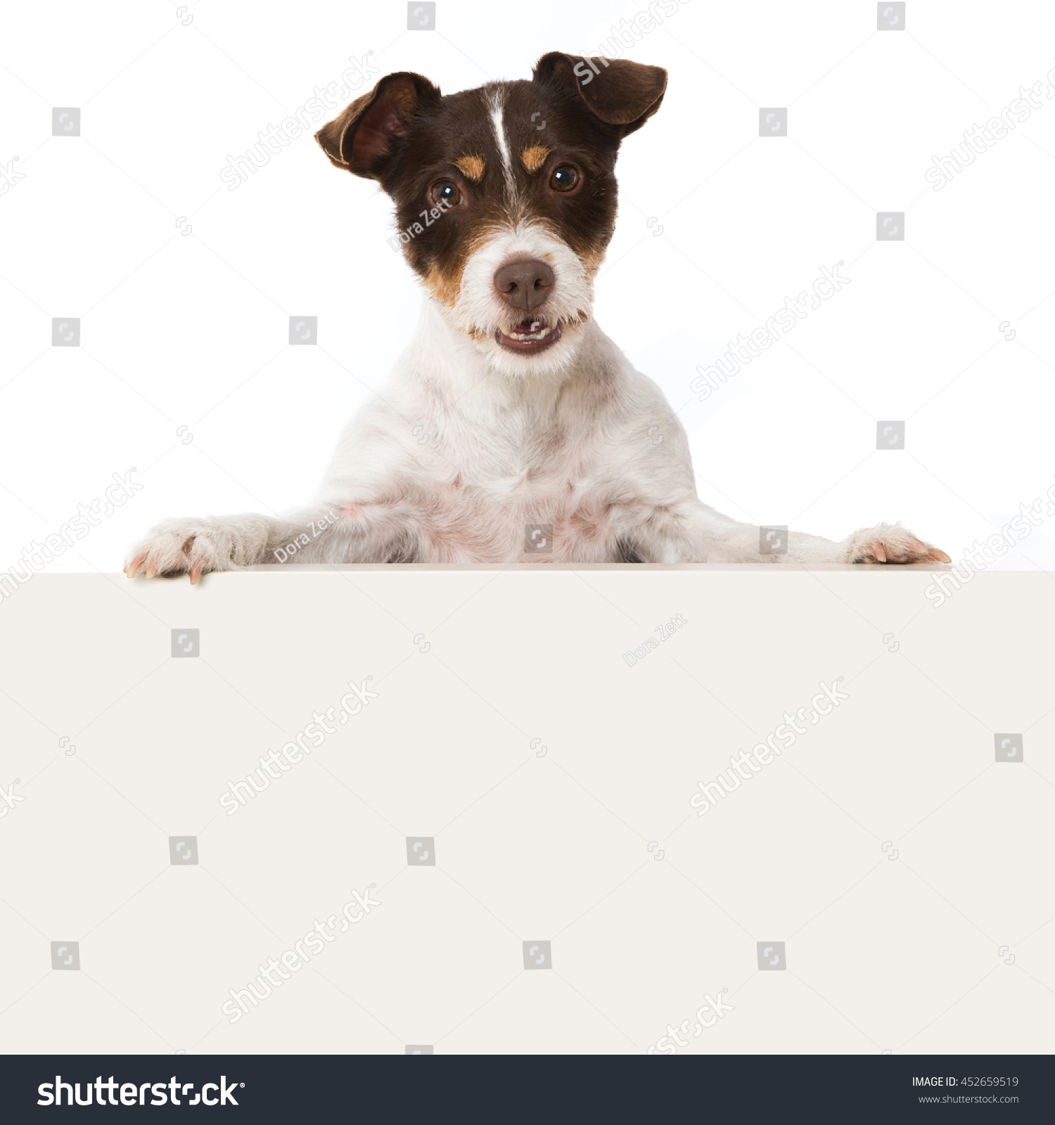 Dog Looking Over Whiteboard Stock Photo (Edit Now) 452659519