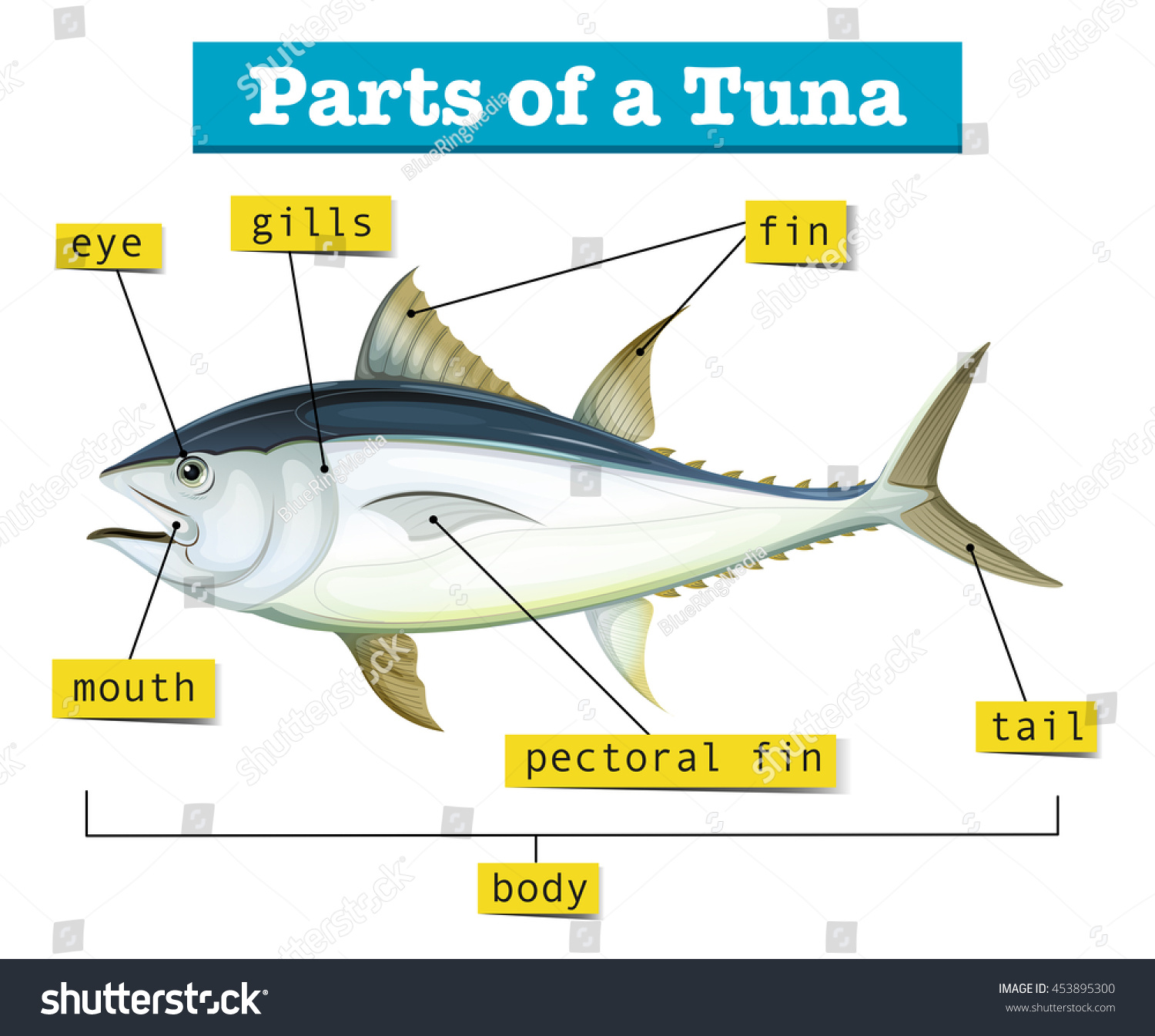 Diagram Of A Tuna - Library Of Wiring Diagram •