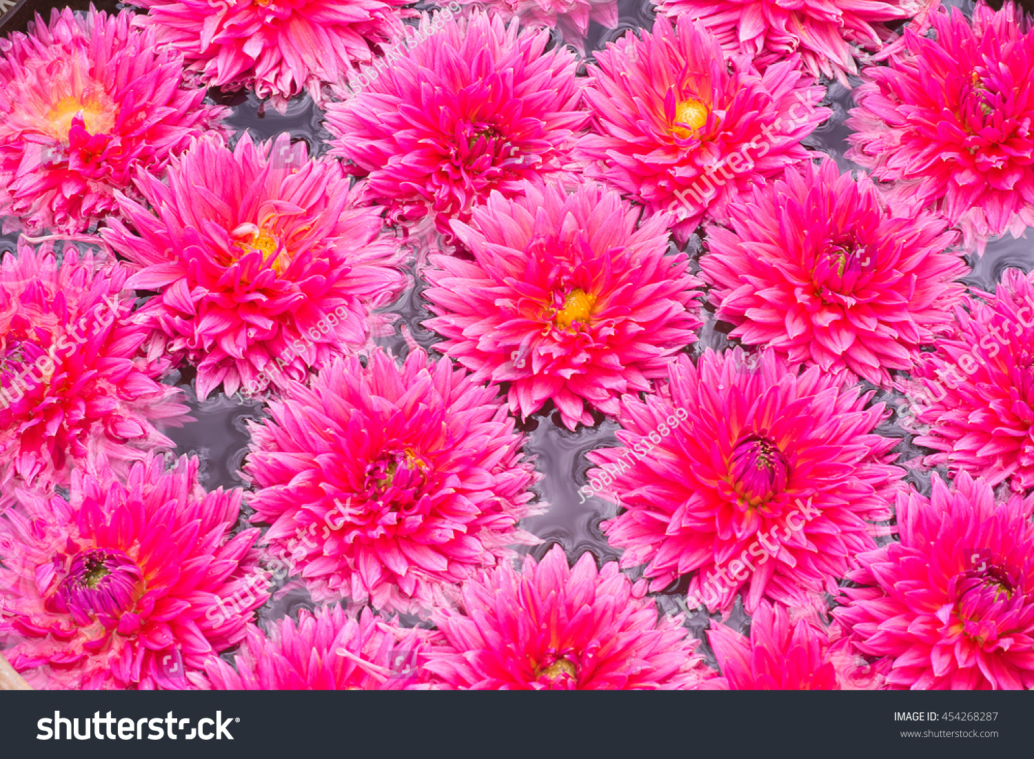Dahlia Flowers On Top Of Water Background Ez Canvas
