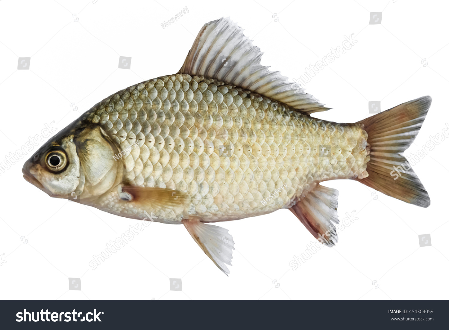 Isolated crucian carp kind fish side stock photo 454304059 for What sides go with fish