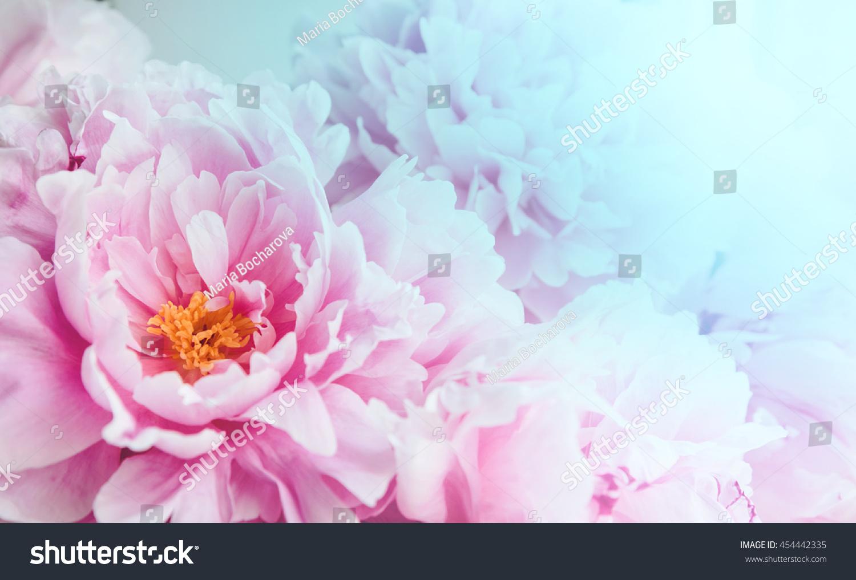 Floral Wallpaper Background Flower Petals Trend Stock Photo Edit