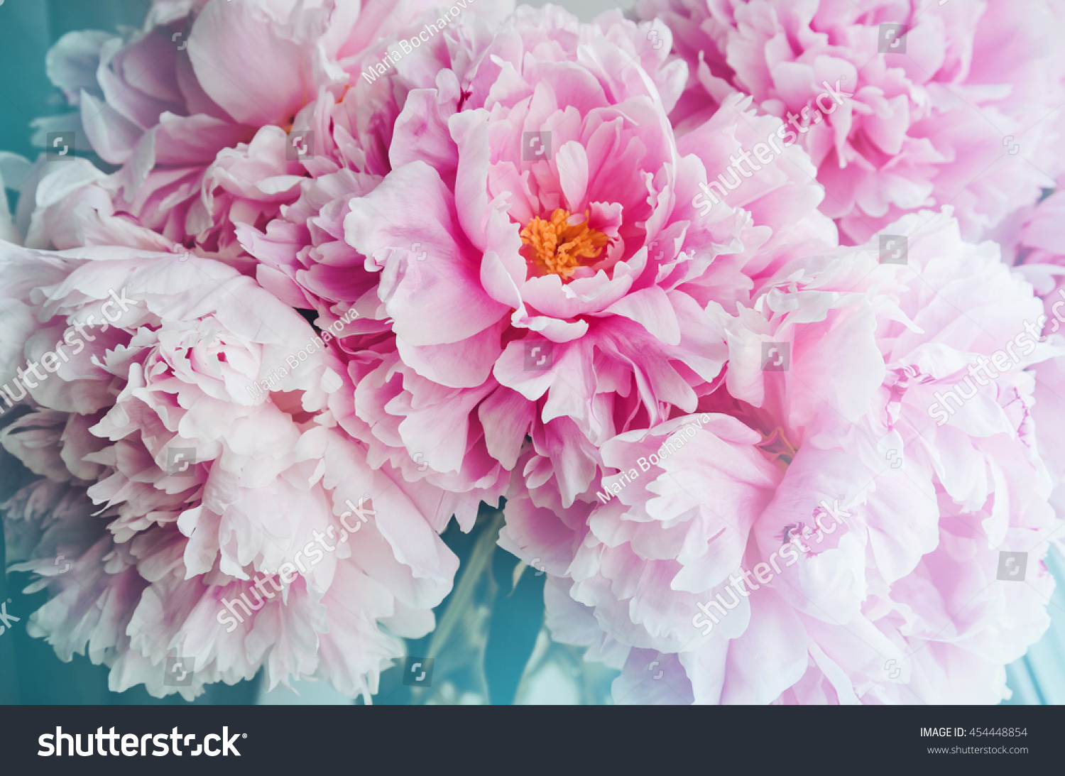 Fresh bunch pink peonies peony roses stock photo 454448854 fresh bunch of pink peonies peony roses flowers white with blue effect shine pastel dhlflorist Images