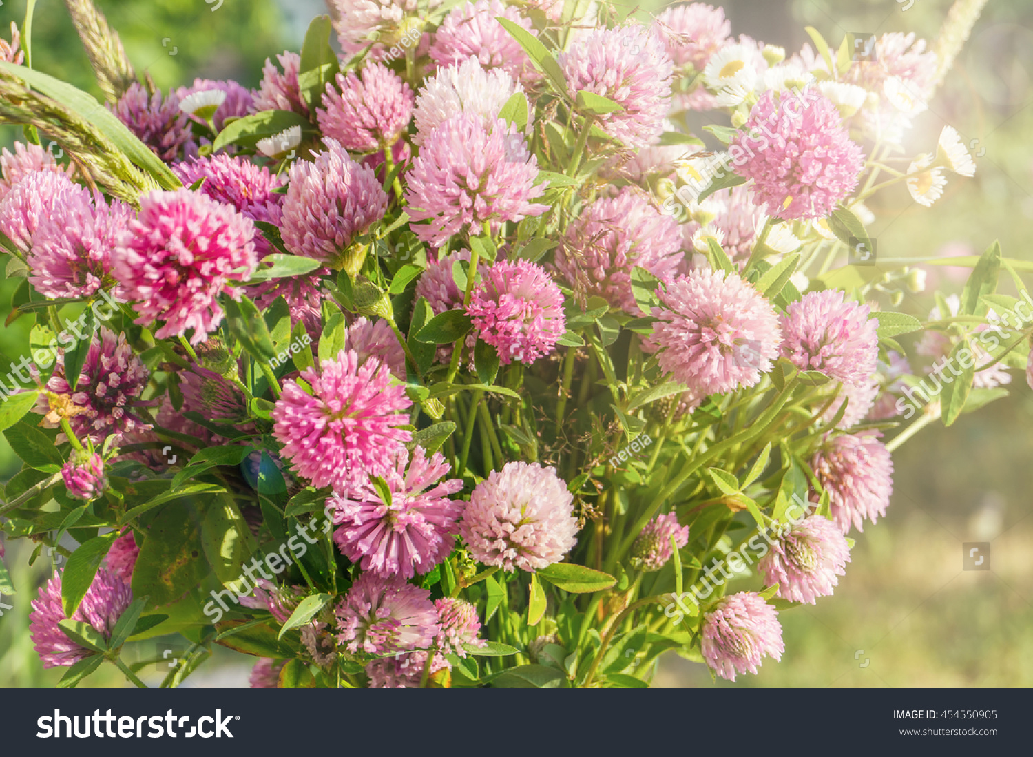 Royalty Free A Wild Bouquet Of Pink Clover Flower On 454550905