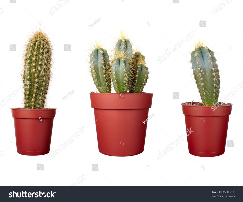 Close Small Cactus Houseplant Pot On Stock Photo 45500200 ...