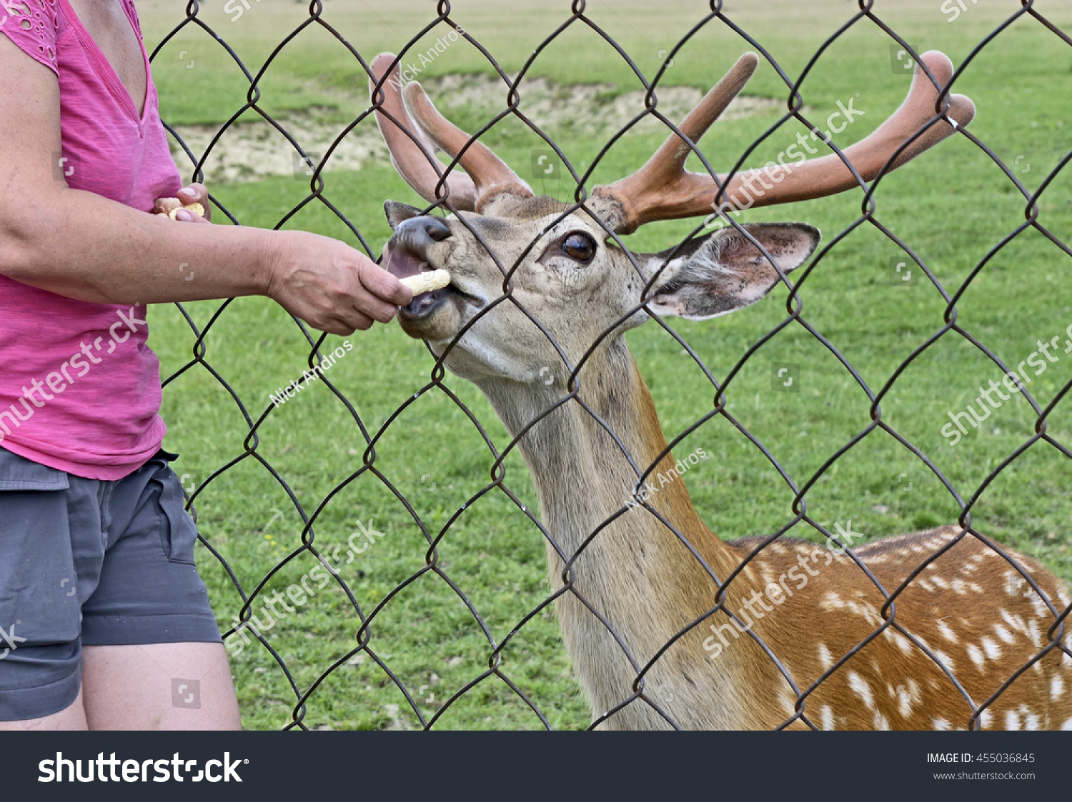 Woman gets deer out of fence