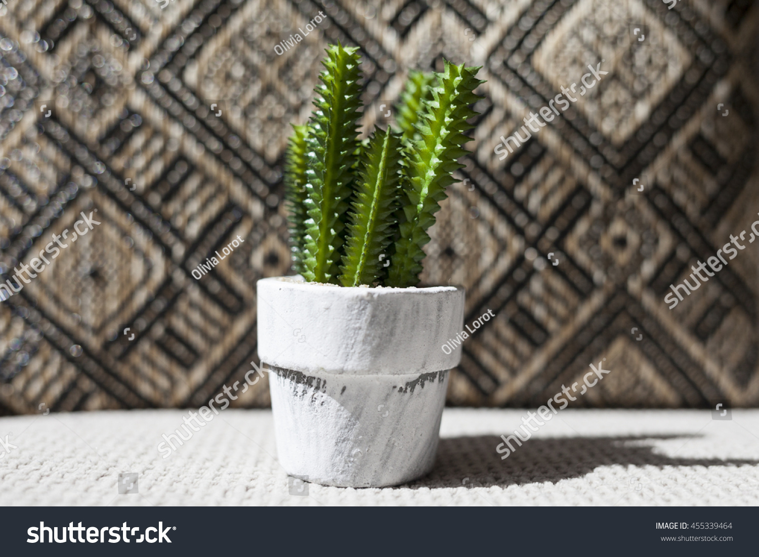 Royalty Free Cute Small Cactus On A White Flower Pot 455339464