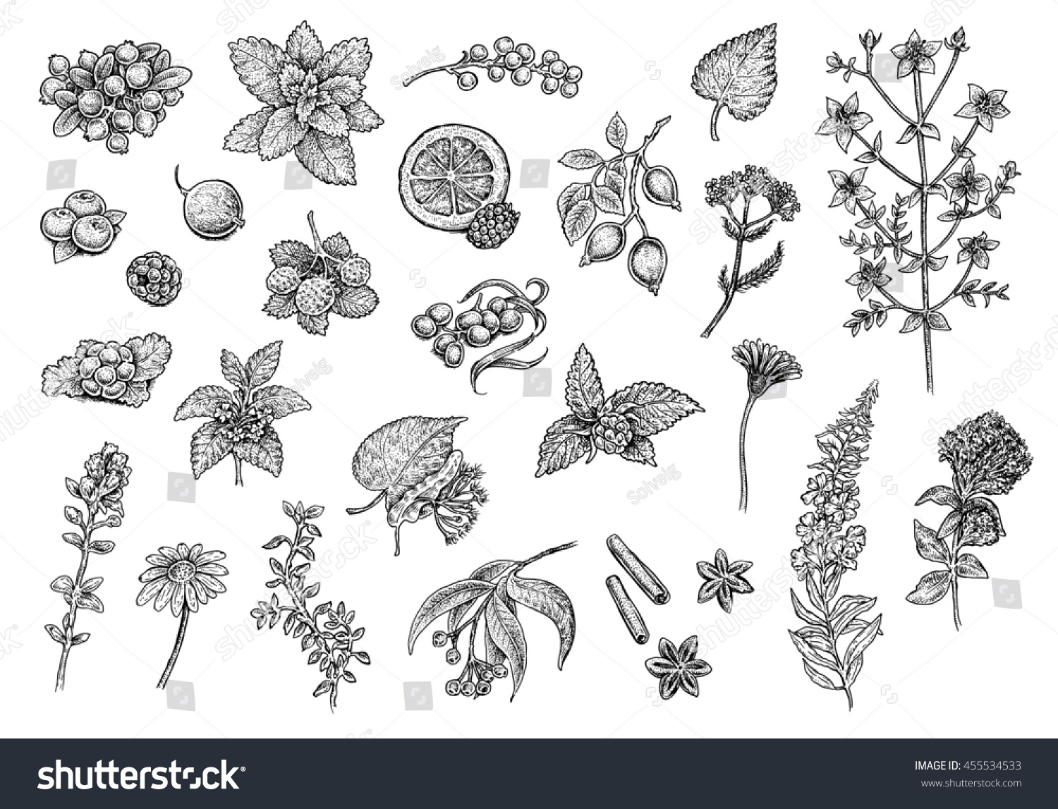 Tea Collection Fruits Herbs And Berries Set Of Hand Drawn Black