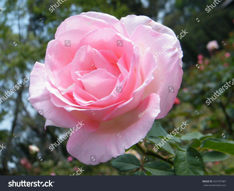 Very beautiful flower blur background stock photo edit now very beautiful flower with blur background izmirmasajfo