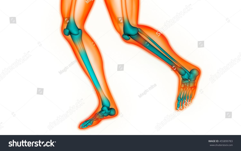 Human Body Bone Joint Pains Foot Stock Illustration 455899783 ...