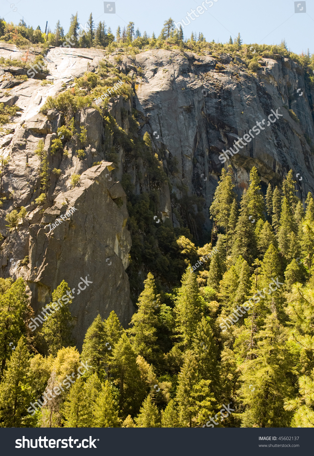 Pine Forest And Granite Cliff Stock Photo 45602137