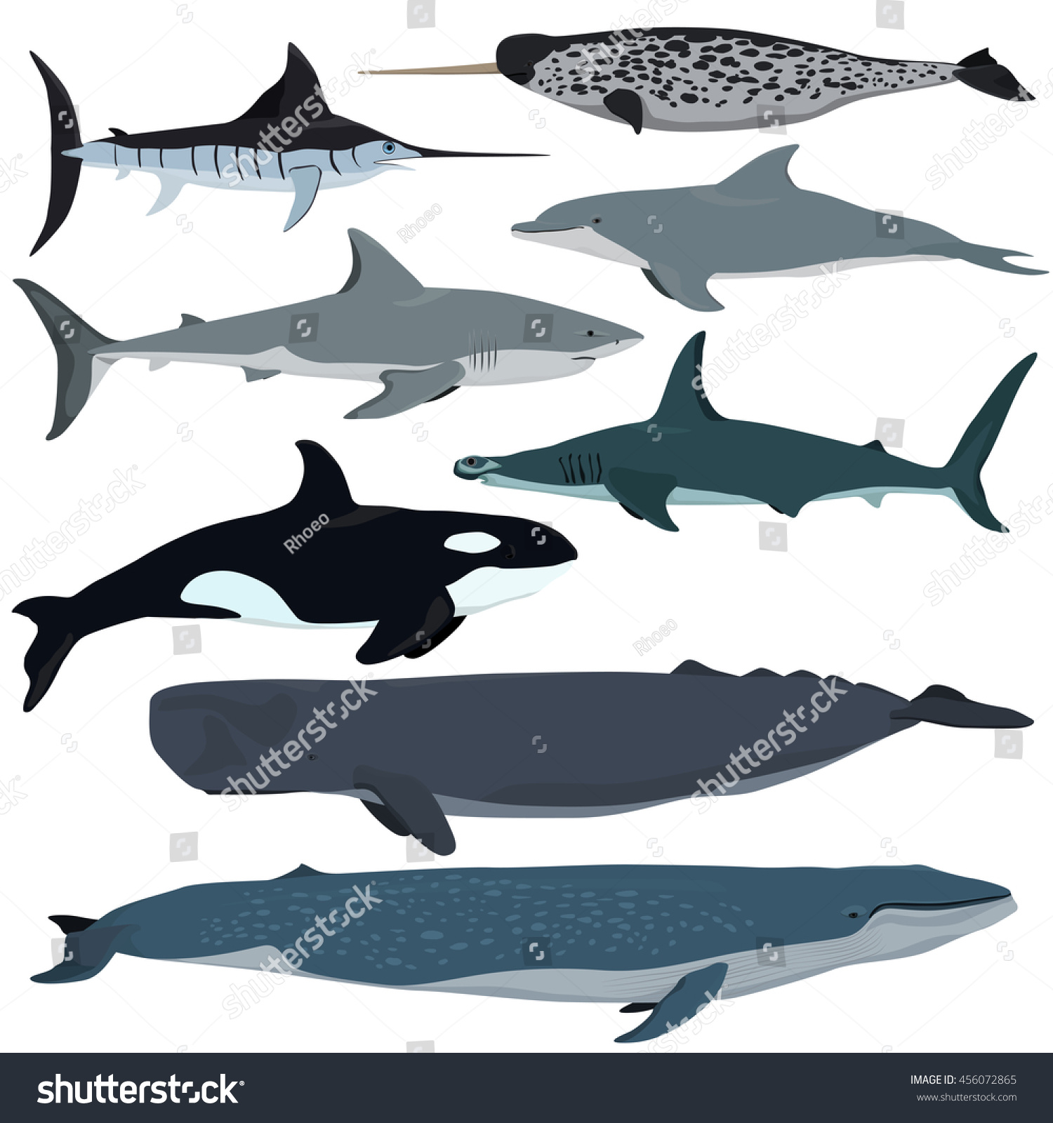 animal size comparison chart