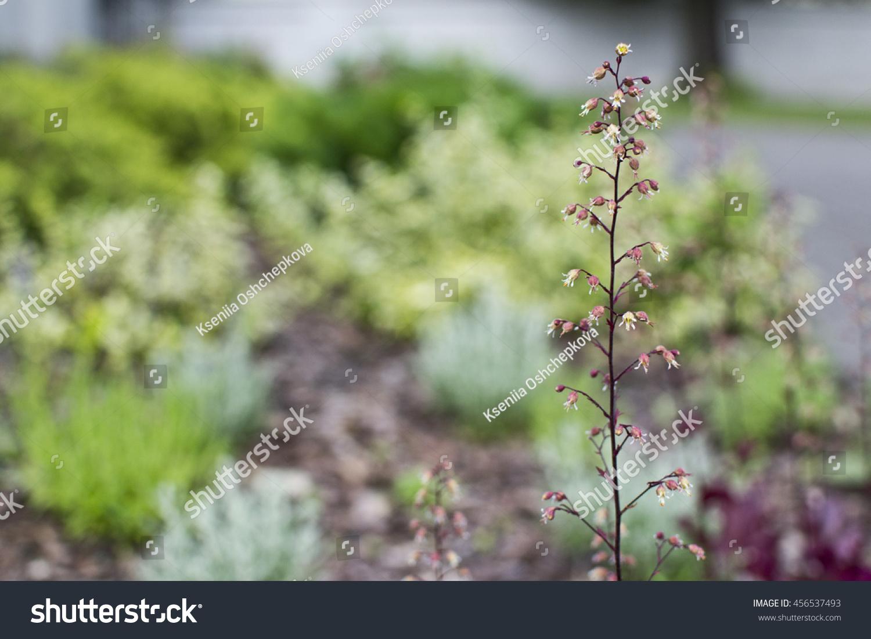 Little Tiny Plant Pink Flowers Around Stock Photo Edit Now